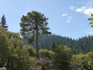 Cordillera del Rif