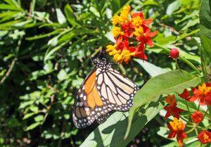 Sendero Mariposa Monarca